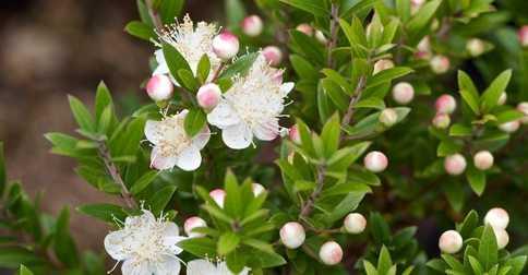 5 loại cây khử mùi, hút ẩm và diệt nấm mốc nên trồng trong nhà