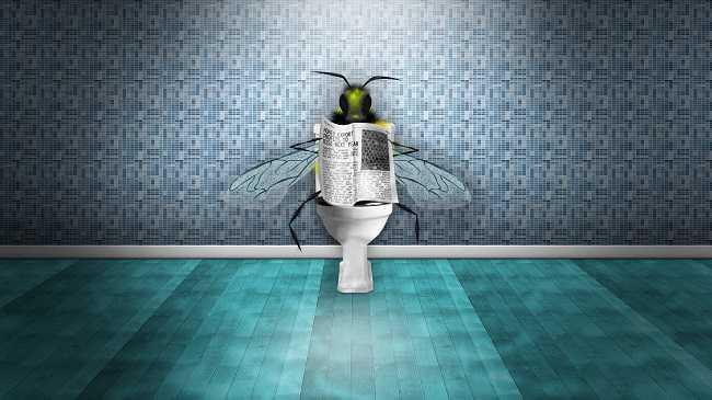Cách diệt ruồi giấm trong nhà vệ sinh đơn giản mà hiệu quả bất ngờ