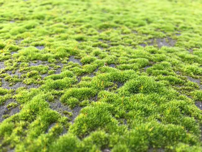 Cách tẩy rong rêu trên nền xi măng