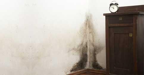 Trời nồm ẩm và giải pháp loại bỏ, ngăn chặn ẩm mốc